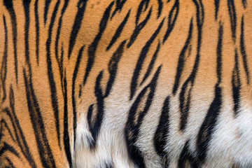 Textures and skins of tiger.