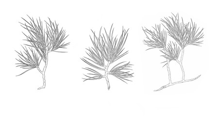 Set of Christmas pine tree branch. Contour illustration