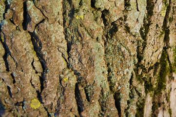 Closeup dry tree bark texture background