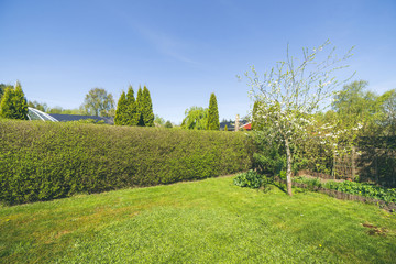 Garden with a lawn and a hedge under a blue sky