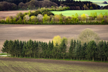 Rural field separated by small pine tree forests