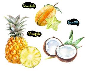 carambola coconut pineapple watercolor