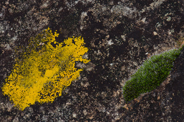 Lichen and moss. El Cardenal. Monfrague National Park. Caceres. Extremadura. Spain.
