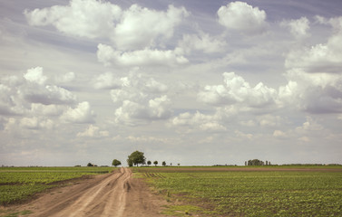Country road leading through agricultural fields under a beautiful blue cloudy sky