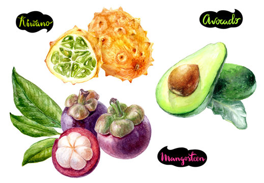 mangosteen avocado kiwano watercolor