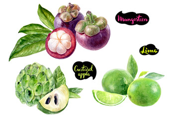 mangosteen lime sugar custard apple watercolor