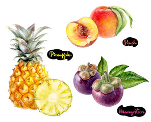mangosteen pineapple peach watercolor