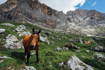 cavallo allo stato brado