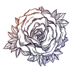 Vintage floral detailed hand drawn rose, leaves.