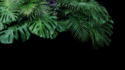 Monstera, fern, and palm leaves tropical foliage plant bush nature backdrop on black background.