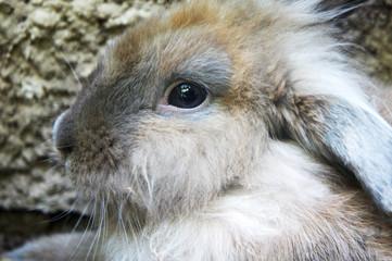 muzzle of a gray rabbit