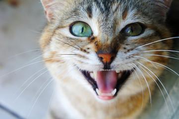 cat's muzzle