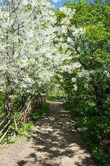 The path in the spring garden