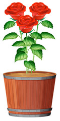 A Pot of Rose Plant
