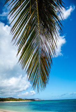 Palm leaf by the ocean in St. Croix, Virgin Islands.