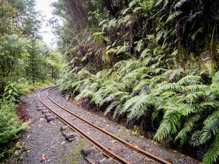 Rustic Vintage Original Railway Rail Tracks Curving Through the Jungle