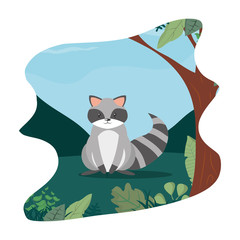 Aluminium Prints Cats cute raccoon wild animal in the landscape
