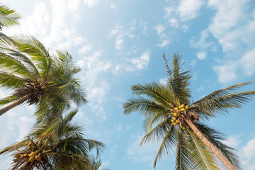 Vintage nature background - coconut palm tree on tropical beach blue sky with sunlight of morning in summer, uprisen angle. vintage instagram filter