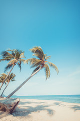 Vintage nature background - Landscape of coconut palm tree on tropical beach in summer. Summer background concept. retro instagram filter effect