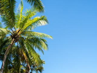 Beautiful Sunny Palm Trees Against Deep Blue Sky in Sunet Light with Clear Space