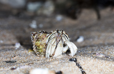 hermit crab on the beach