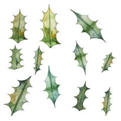 watercolor illustration of mistletoe leaves