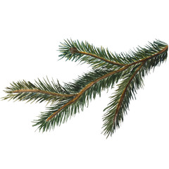 watercolor illustration of a pine branch