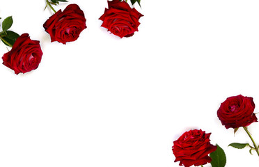 Red roses on a white background with space for text. Top view, flat lay. Valentine decoration.