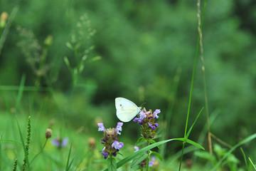 flower, nature, green, plant, flowers, pink, spring, summer, purple, garden, meadow, flora, blossom, wild, macro, grass, bloom, blue, beautiful, closeup, butterfly, petal, geranium, insect, beauty