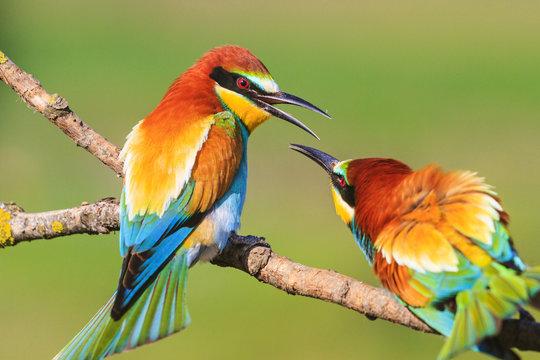 spring colored birds flirting