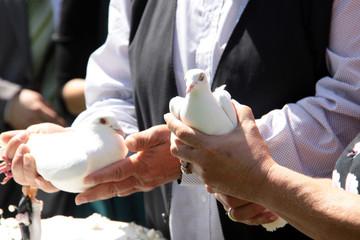 Taube in der Hand
