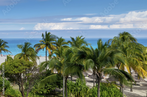 Green Palm Trees And Tropical In The Tropics By Beach Umbrellas