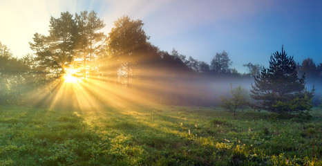 panorama landscape with sun and forest and meadow at sunrise