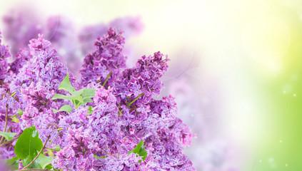 Poster Bloemen Bush of Lilac