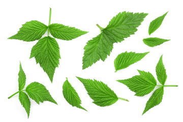 Raspberry leaves isolated on white background. Top view. Flat lay