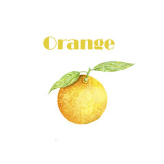 Watercolor orange fruit. Fresh illustration. Painting hand drawn art color juicy element on white background