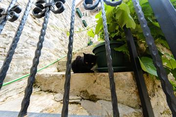 A black cat sits on a stone step