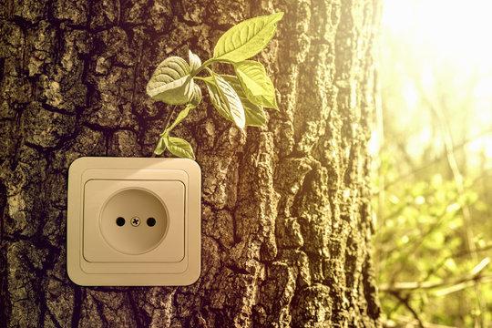 Green energy concept, power socket in tree trunk