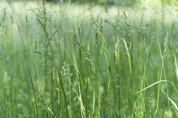 Gräser im Frühling