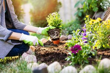 Wall Murals Garden gardener planting flowers in garden bed
