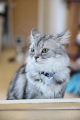 Cute cat looking relax