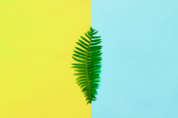 Fern leaves on a multi-colored yellow blue background.
