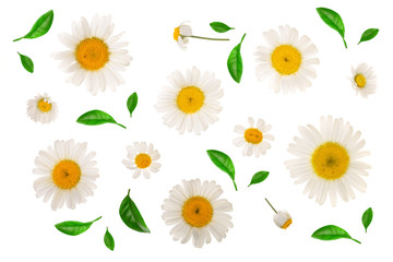 chamomile or daisies with leaves isolated on white background. Top view. Flat lay