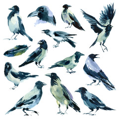 Watercolor painting. Set of sketches of crows on white background.