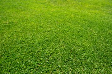 Grüner Fußballrasen als Hintergrund Textur