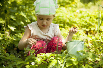 Girl picking strawberry in a field. (Agriculture, health, bio food concept)
