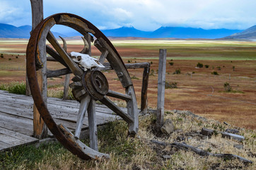Old wagon wheel and sheep skull at Estancia ranch outpost in Patagonia, Argentina