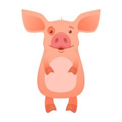 Cute pig cartoon