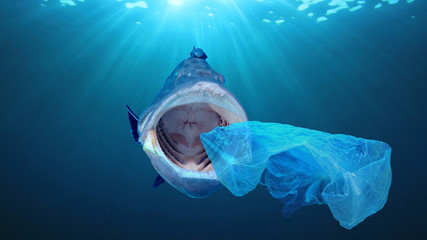 Plastic pollution contaminates seafood in ocean. Fish eats plastic bag