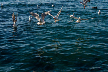 Seagulls are flying over sea waters